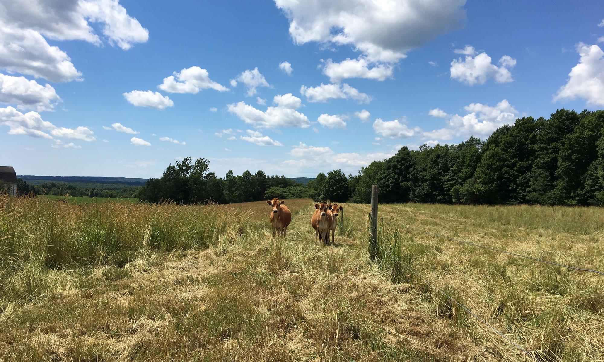 Plato Dale Farm